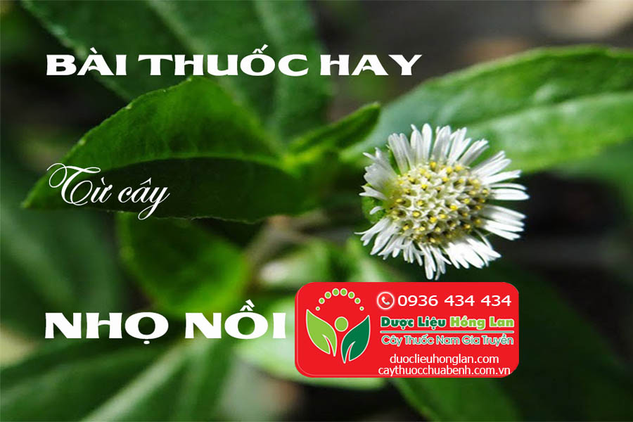 BAI-THUOC-HAY-TU-CAY-CO-MUC-NHO-NOI-CTY-DUOC-LIEU-HONG-LAN