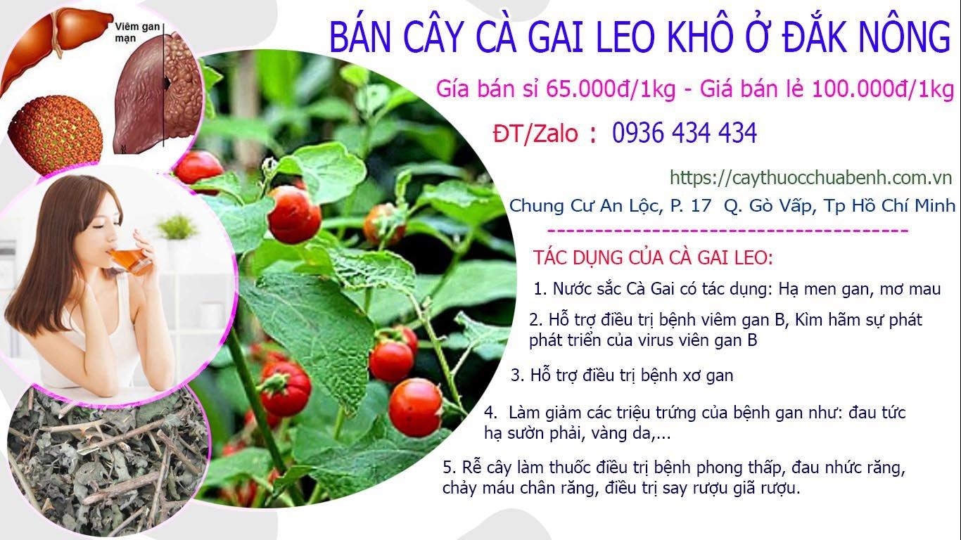 Mua bán Cây Cà Gai Leo khô ở Đắk Nông giá từ 65k