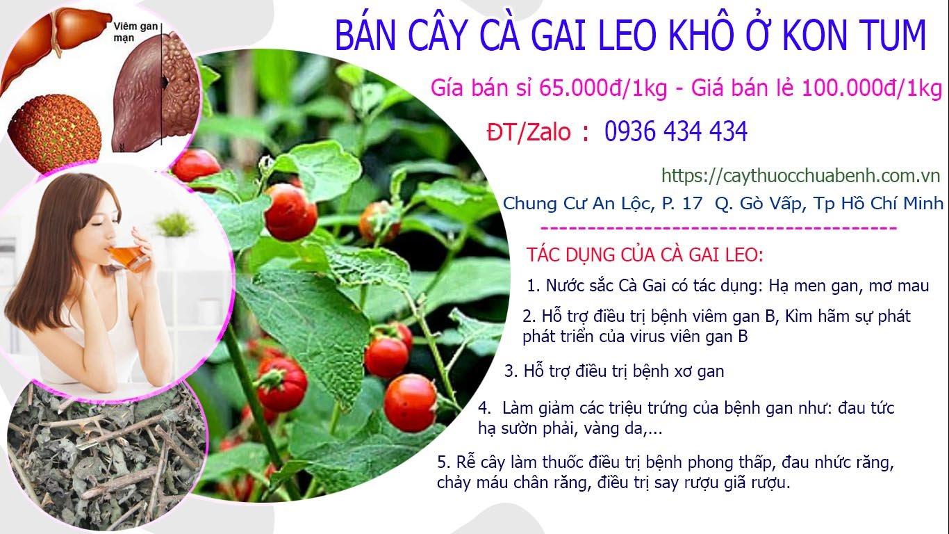 Mua bán Cây Cà Gai Leo khô ở Kon Tum giá từ 65k