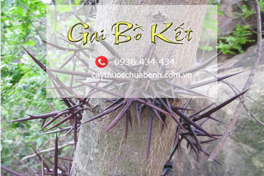GAI_BO_KET