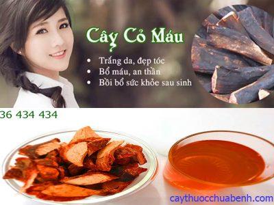 CAY CO MAU CHUA BENH GI