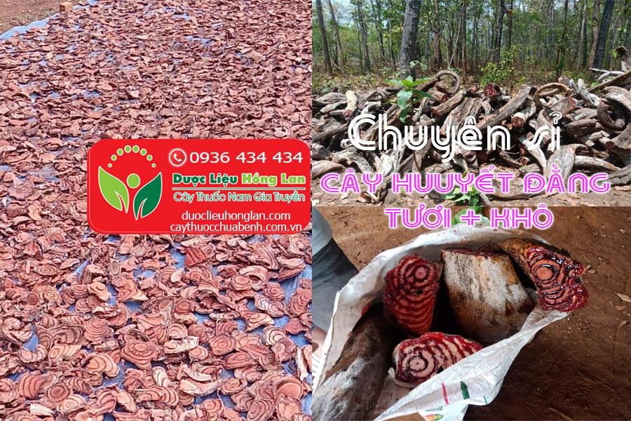 CHUYEN-SI-DAU-NGUON-CAY-HUYEN-DANG-TUOI-KHO-CTY-DUOC-LIEU-HONG-LAN