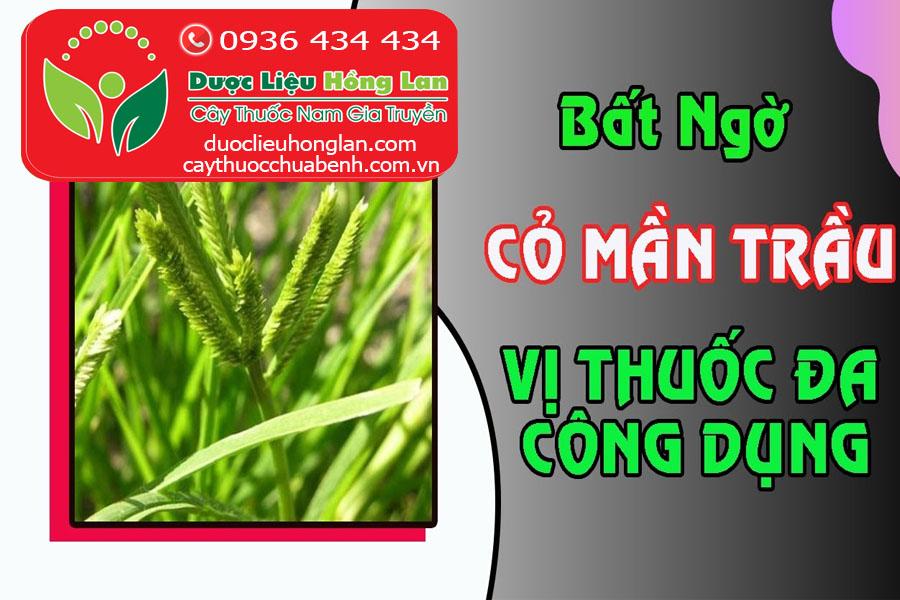 CO MAN TRAU VI THUOC DA CONG DUNG