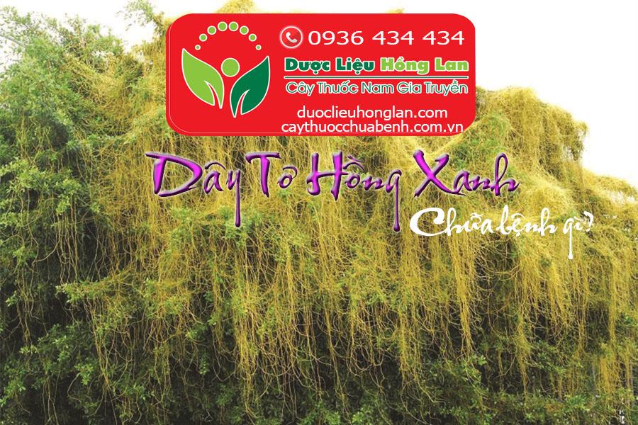 DAY TO HONG XANH CHUA BENH GI