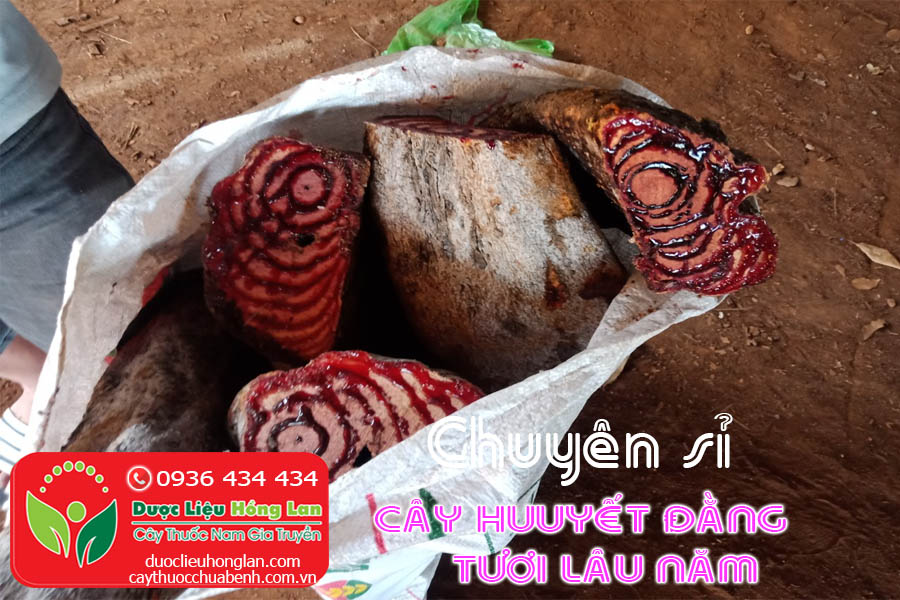 GIA-SI-CAY-HUYEN-DANG-CTY-DUOC-LIEU-HONG-LAN