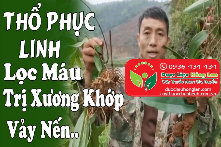 CONG_DUNG_TAC_DUNG_CHUA_BENH_THO_PHUC_LINH_KHO_DUOC_LIEU_HONG_LAN