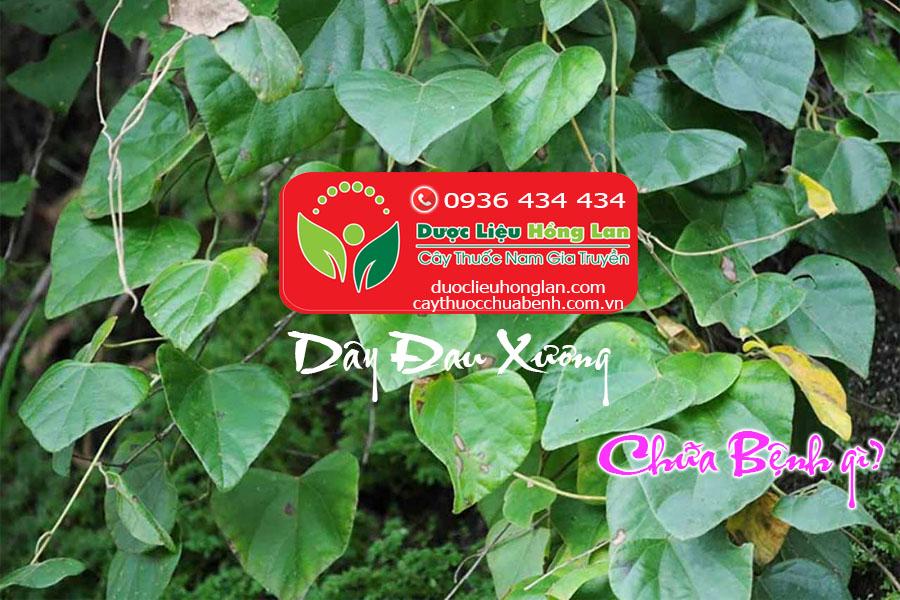 DAY_DAU_XUONG_KHOAN_CAN_DANG_CHUA_BENH_GI_DUOC_LIEU_HONG_LAN
