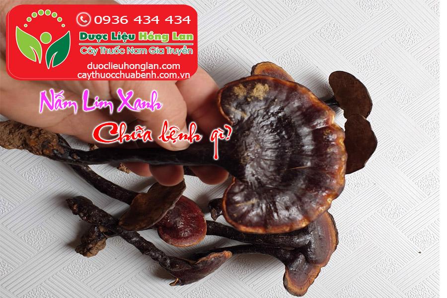 NAM_LIM_XANH_CHUA_BENH_GI_DUOC_LIEU_HONG_LAN
