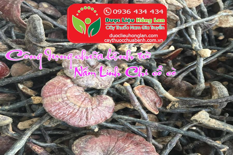 NAM_LINH_CHI_CO_CO_CHUA_BENH_GI_DUOC_LIEU_HONG_LAN