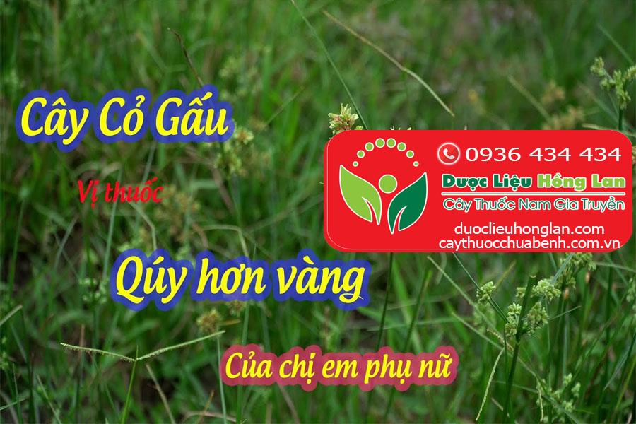 CAY-CO-GAU-HUONG-PHU-CO-TAC-DUNG-GI-CTY-DUOC-LIEU-HONG-LAN