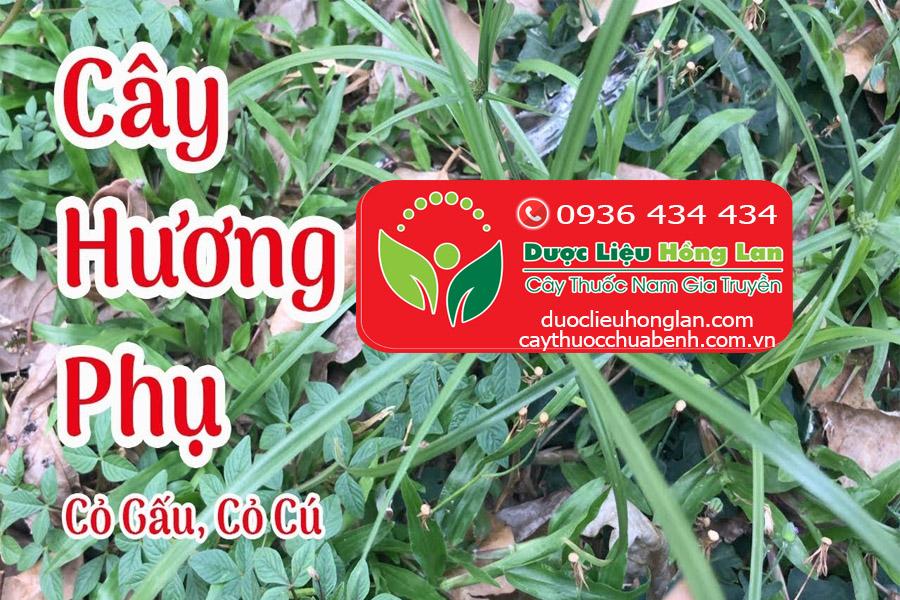 CAY-CO-GAU-HUONG-PHU-CTY-DUOC-LIEU-HONG-LAN