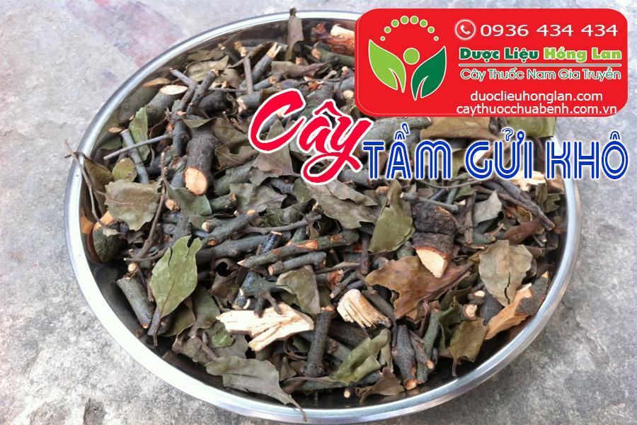 CAY-TAM-GUI-KHO-CTY-DUOC-LIEU-HONG-LAN