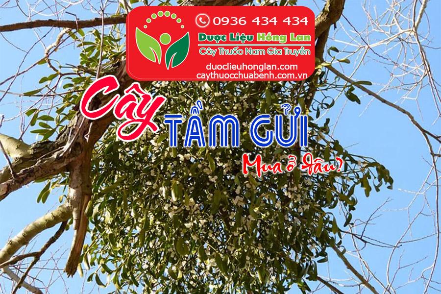 CAY-TAM-GUI-MUA-O-DAU-CTY-DUOC-LIEU-HONG-LAN