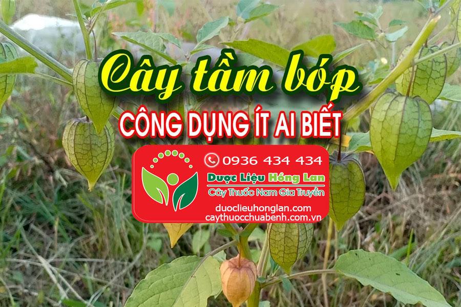 CONG-DUNG-CACH-DUNG-CAY-TAM-BOP-THU-LU-CTY-DUOC-LIEU-HONG-LAN