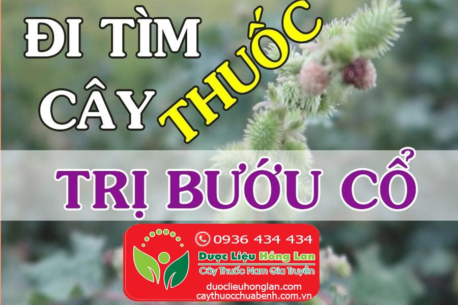 KE-DAU-NGUA-CHUA-BENH-BUU-CO-CTY-DUOC-LIEU-HONG-LAN