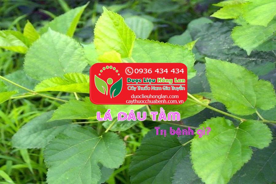 LA-DAU-TAM-TRI-BENH-GI-CTY-DUOC-LIEU-HONG-LAN