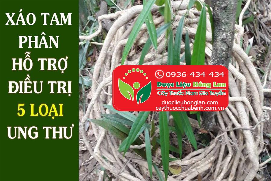 THAO-DUOC-XAO-TAM-PHAN-CHUA-UNG-THU-DUOCLIEUHONGLAN