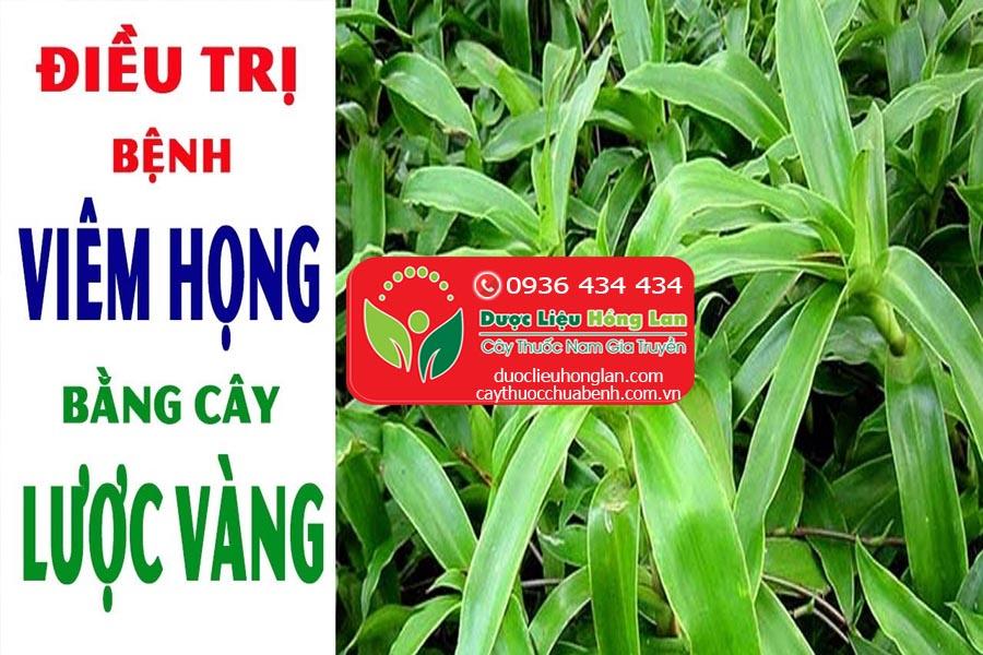 CAY-LUOC-VANGCHUA-BENH-VIEM-HONG-CTY-DUOC-LIEU-HONG-LAN