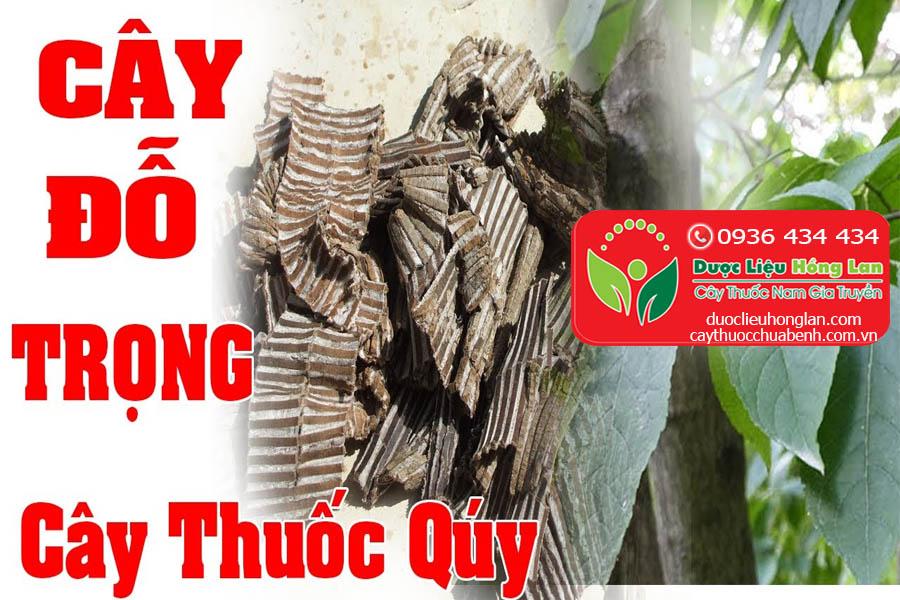 CAY-THUOC-CHUA-BENH--DO-TRONG-CTY-DUOC-LIEU-HONG-LAN