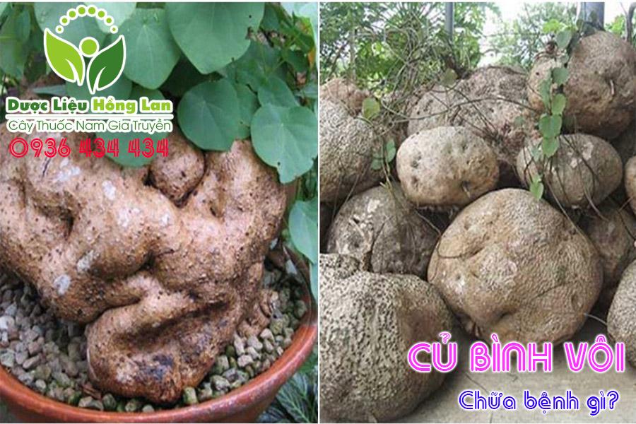 CU-BINH-VOI-CHUA-BENH-GI-CTY-DUOC-LIEU-HONG-LAN