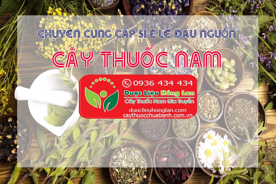 CUNG-CAP-SI-VA-LE-DAU-NGUON-CAY-THUOC-NAM-CHUA-BENH-CTY-DUOC-LIEU-HONG-LAN 01