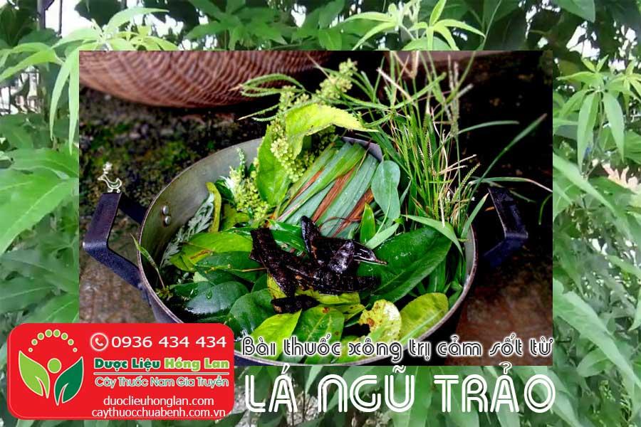 BAI-THUOC-XONG-TRI-CAM-SOT-TU-LA-CAY-NGU-TRAO-CTY-DUOC-LIEU-HONG-LAN
