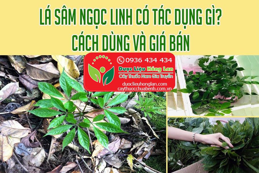 GIA-BAN-LA-SAM-NGOC-LINH-KON-TUM-CTY-DUOC-LIEU-HONG-LAN