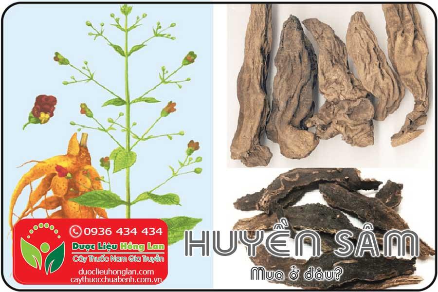 HUYEN-SAM-MUA-O-DAU-TPHCM-CTY-DUOC-LIEU-HONG-LAN