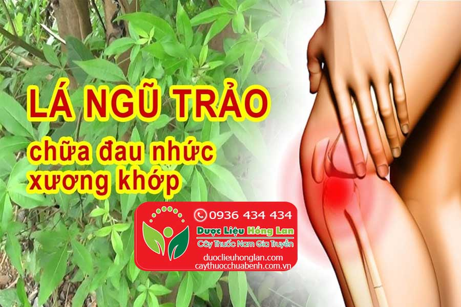 LA-CAY-NGU-TRAO-CHUA-DAU-NHUC-XUONG-KHOP-CTY-DUOC-LIEU-HONG-LAN