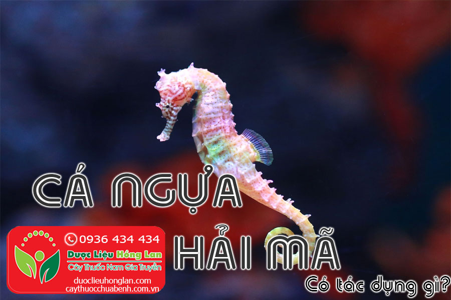 CA-NGUA-HAI-MA-CO-TAC-DUNG-GI-CTY-DUOC-LIEU-HONG-LAN
