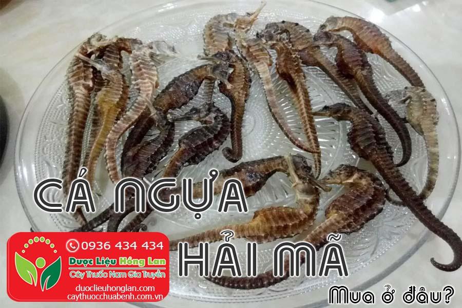 CA-NGUA-HAI-MA-MUA-O-DAU-TPHCM-HA-NOI-CTY-DUOC-LIEU-HONG-LAN