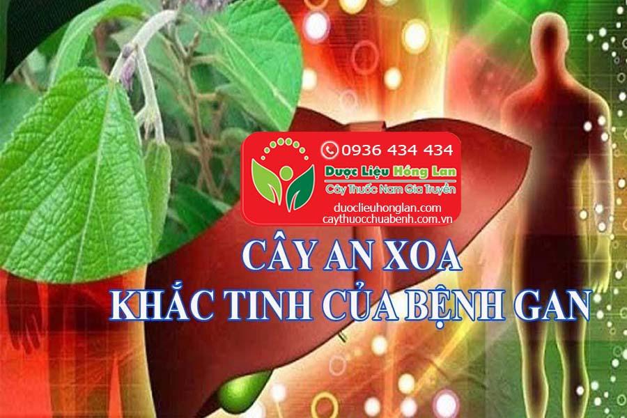 CAY-AN-XOA-CO-TAC-DUNG-CHUA-BENH-GAN-CTY-DUOC-LIEU-HONG-LAN