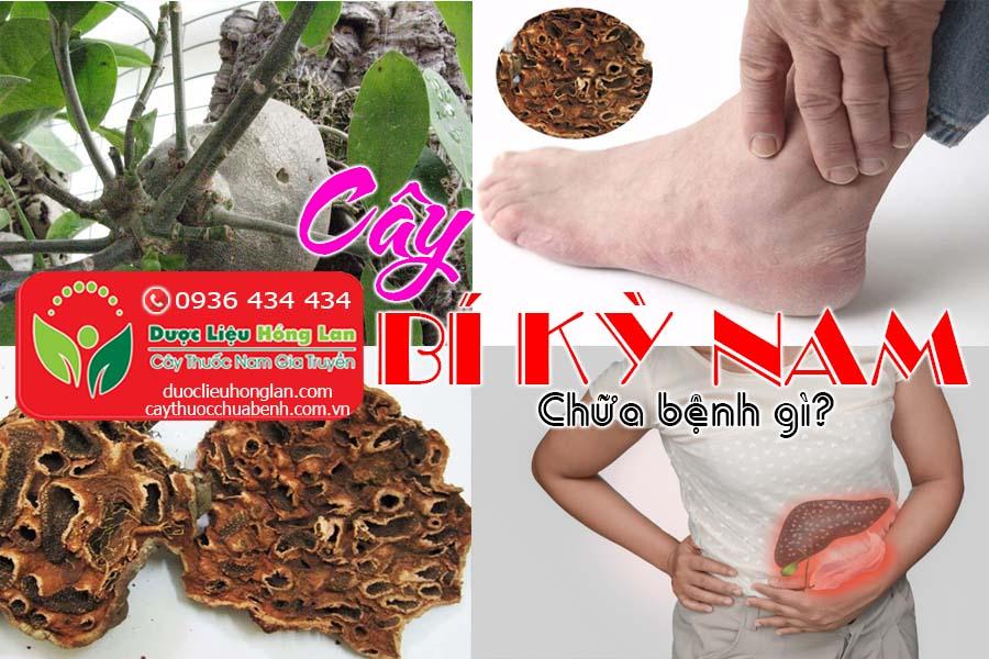 CAY-BI-KY-NAM-CHUA-BENH-GI-CTY-DUOC-LIEU-HONG-LAN