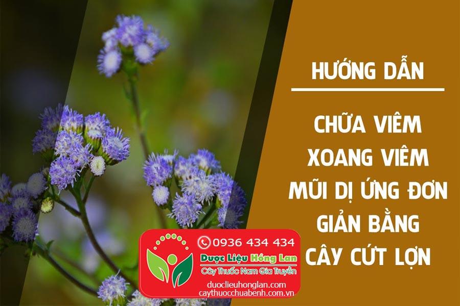 CAY-CO-CUT-LON-CO-HOI-CHUA-BENH-GI-CTY-DUOC-LIEU-HONG-LAN