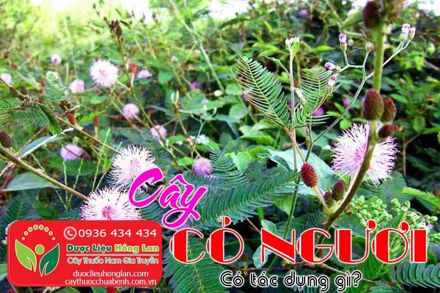 CAY-CO-NGUOI-TRINH-NU-MAC-CO-XAU-HO-CO-TAC-DUNG-GI-CTY-DUOC-LIEU-HONG-LAN