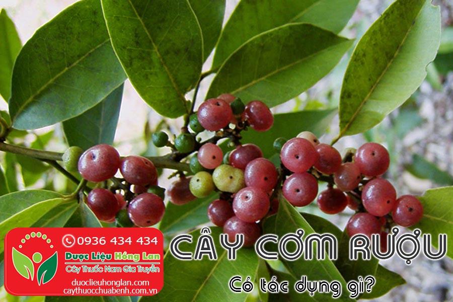 CAY-COM-RUOU-CO-TAC-DUNG-GI-CTY-DUOC-LIEU-HONG-LAN