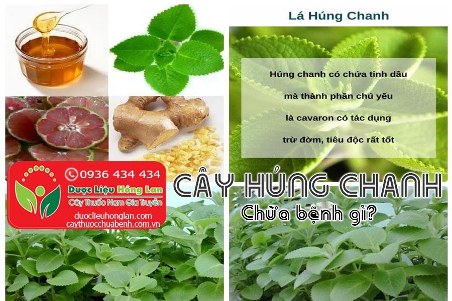 CAY-HUNG-CHANH-CHUA-BENH-GI-CTY-DUOC-LIEU-HONG-LAN
