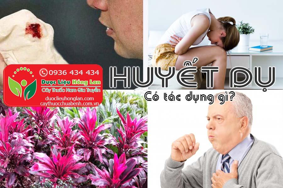CAY-HUYET-DU-CO-TAC-DUNG-GI-CTY-DUOC-LIEU-HONG-LAN