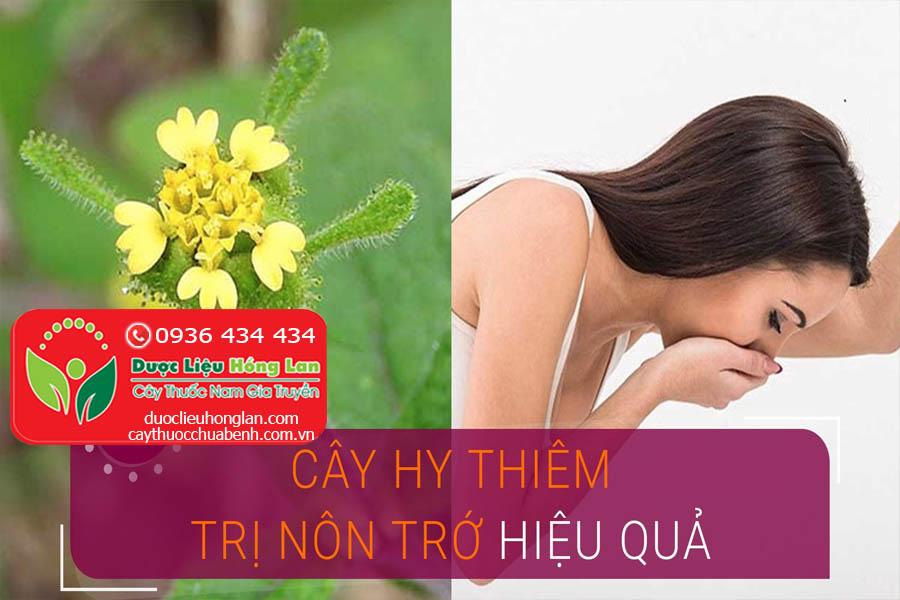 CAY-HY-THIEM-CHUA-BENH-NON-CHO-HIEU-QUA-CTY-DUOC-LIEU-HONG-LAN