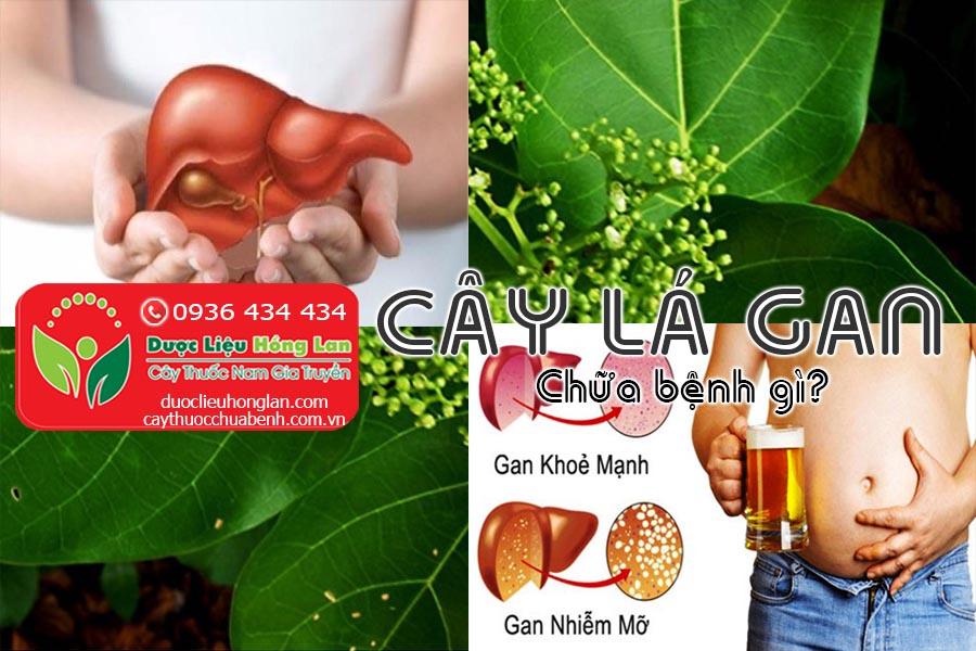 CAY-LA-GAN-CHUA-BENH-GI-CTY-DUOC-LIEU-HONG-LAN