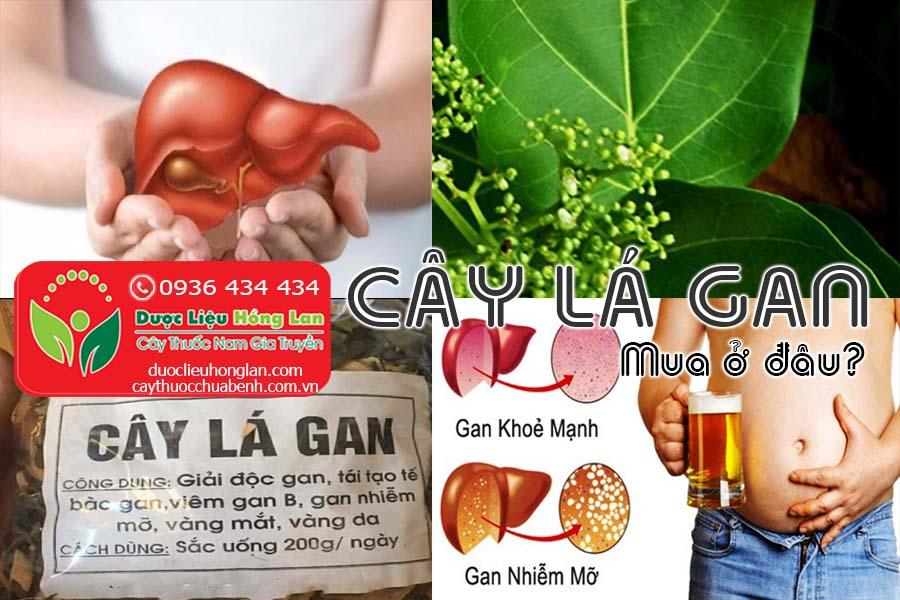 CAY-LA-GAN-MUA-O-DAU-TPHCM-HA-NOI-CTY-DUOC-LIEU-HONG-LAN