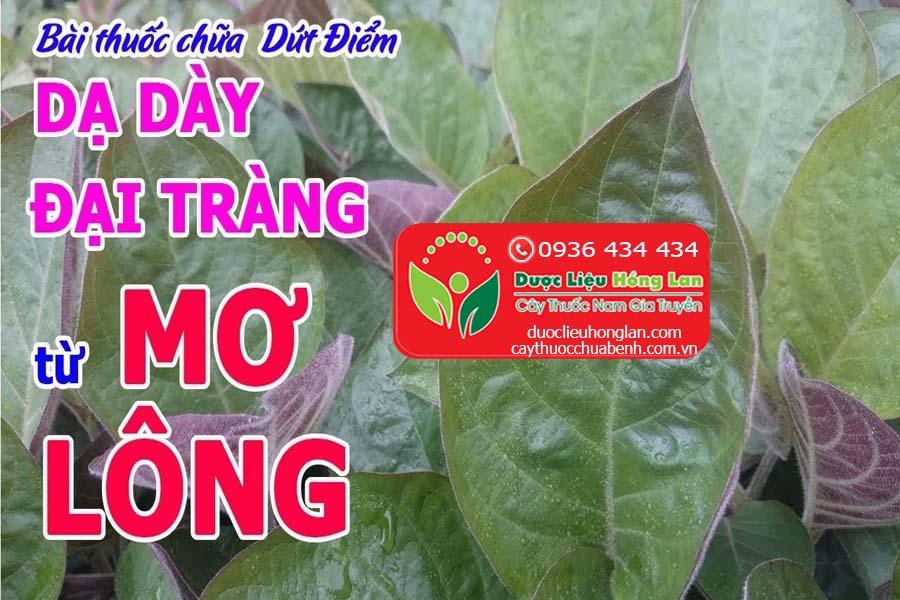 CAY-MO-TAM-THE-MO-LONG-MO-LA-TIM-CHUA-BENH-GI-CTY-DUOC-LIEU-HONG-LAN