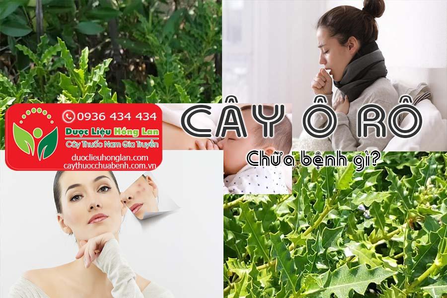 CAY-O-RO-CHUA-BENH-GI-CTY-DUOC-LIEU-HONG-LAN