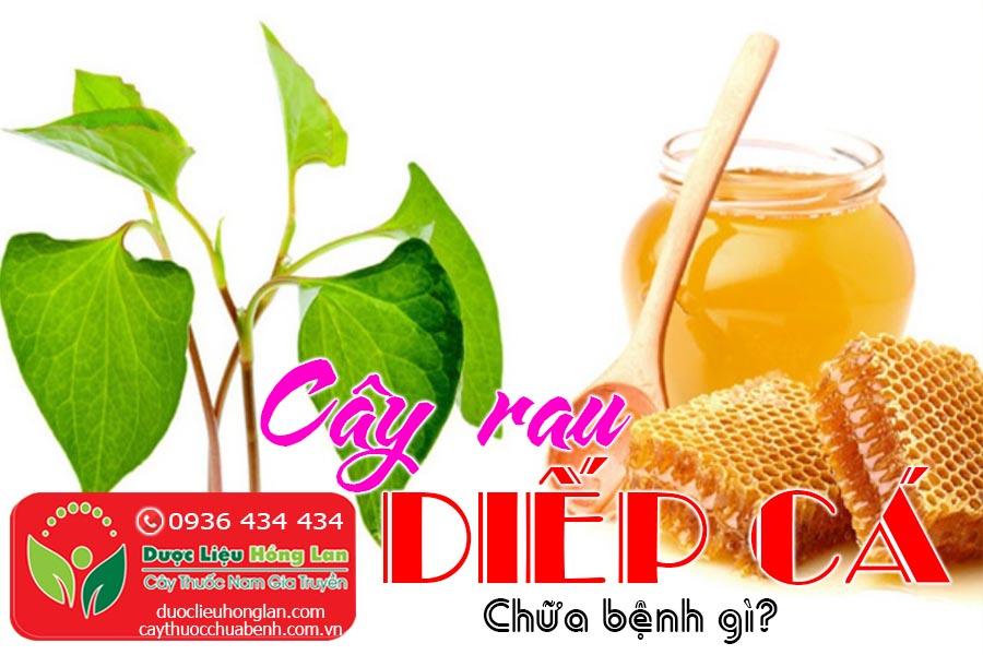 CAY-RAU-DIEP-CA-CHUA-BENH-GI-CTY-DUOC-LIEU-HONG-LAN