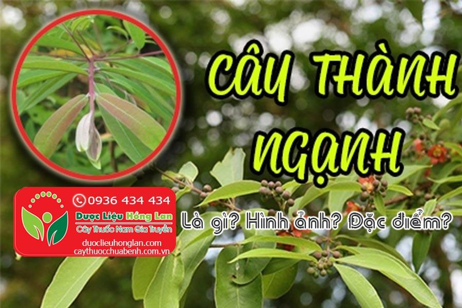 CAY-THANH-NGANH-CAY-DO-NGON-LA-GI-HINH-ANH-DAC-DIEM-SONG-O-DAU-CTY-DUOC-LIEU-HONG-LAN