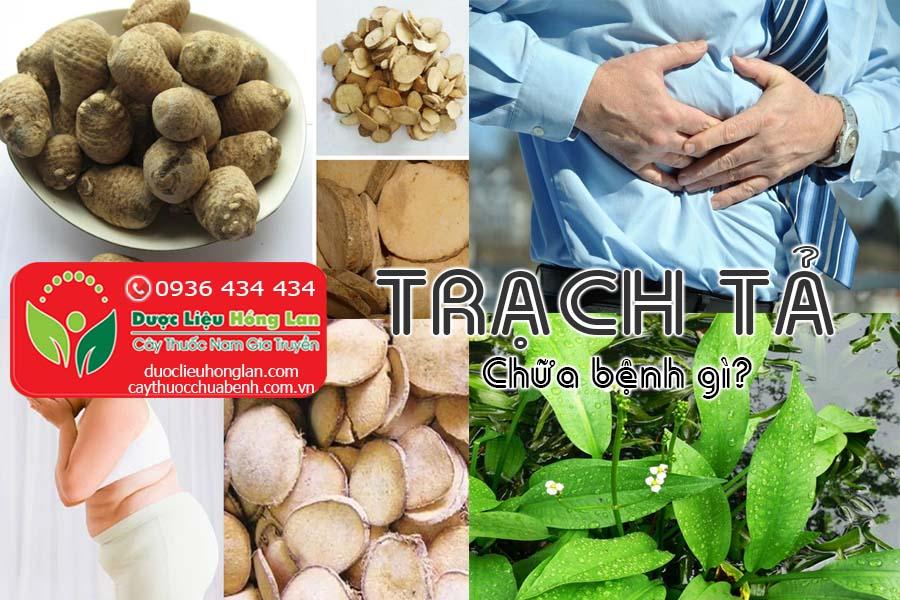 CAY-THUOC-TRACH-TA-CHUA-BENH-GI-CTY-DUOC-LIEU-HONG-LAN
