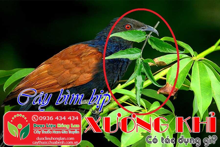 CAY-XUONG-KHI-BIM-BIM-MANH-CO-TAC-DUNG-GI-CONG-CTY-DUOC-LIEU-HONG-LAN
