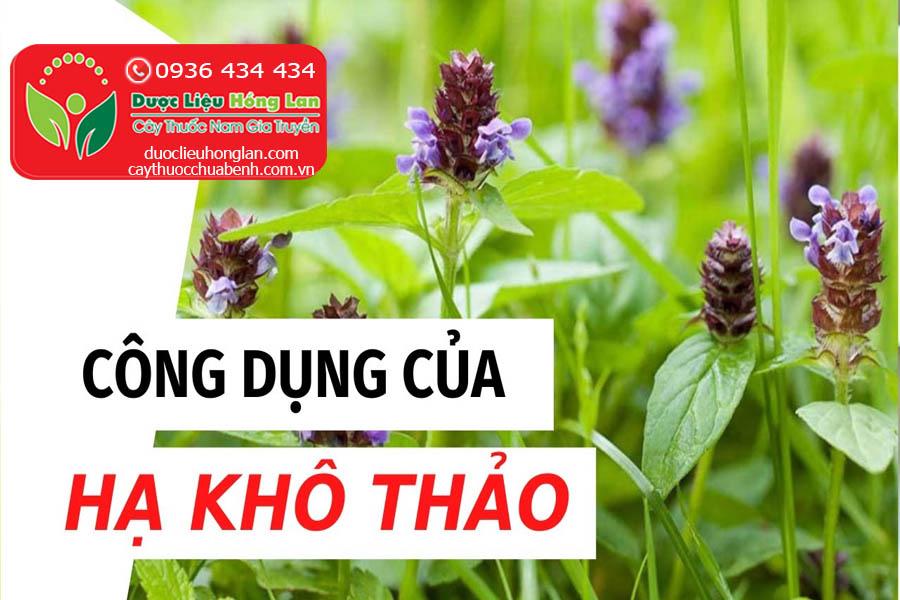 CONG-DUNG-CACH-DUNG-LIEU-DUNG-CAY-HA-KHO-THAO-CTY-DUOC-LIEU-HONG-LAN