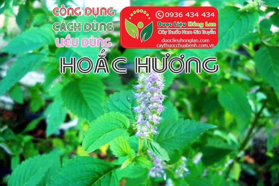 CONG-DUNG-CACH-DUNG-LIEU-DUNG-CAY-HOAC-HUONG-CTY-DUOC-LIEU-HONG-LAN