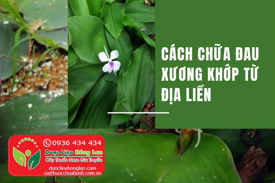 CU-CAY-DIA-LIEN-CHUA-BENH-GI-CTY-DUOC-LIEU-HONG-LAN